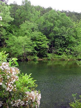 little-river-and-mtn-laurel.jpg