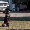 Disc dog fun - Saturday, March 28, 2015 - Frame: 3072