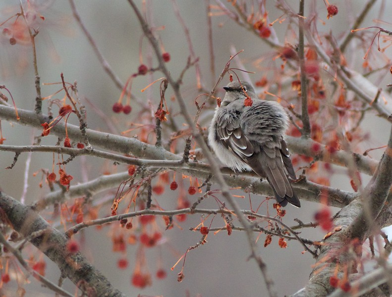 Townsend's Solitaire 4724 Oakley St Lakeside Duluth MN IMG_3642.jpg