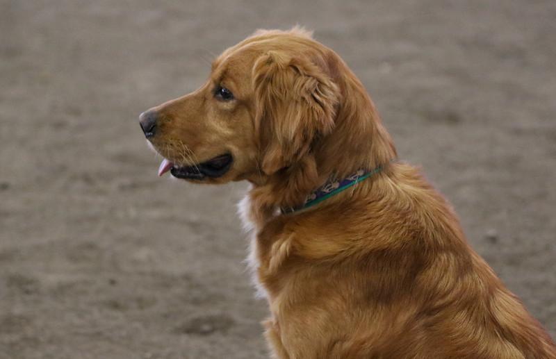 3-15-2015 Bloodhound-9816.jpg