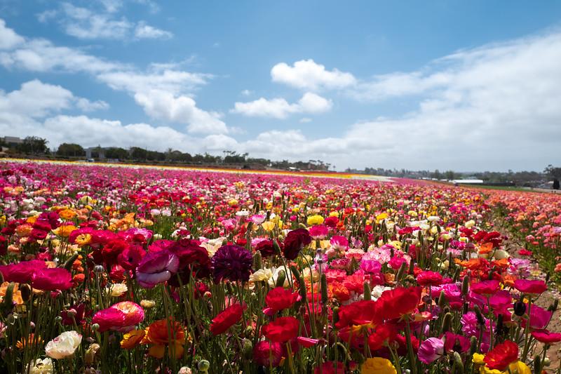 Spring Flowers A-191.jpg