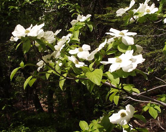 favorite wild flowers