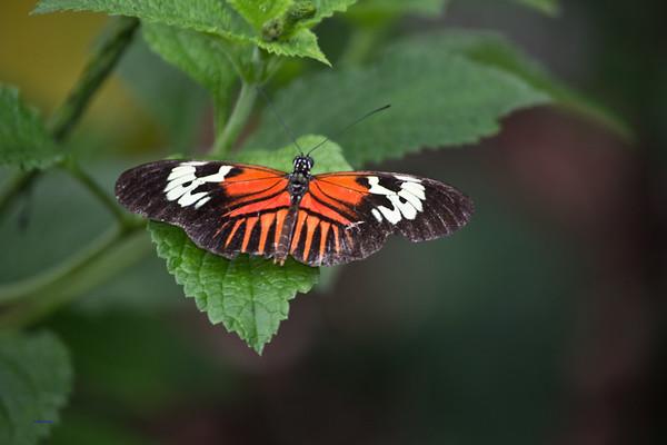 Butterfly World 2014