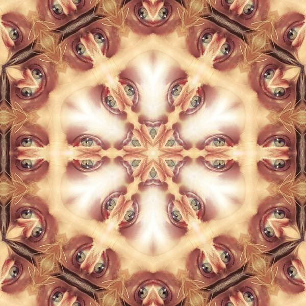 image%3A31812_mirror8.jpg
