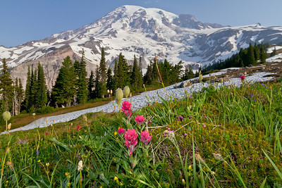 Mount Rainier National Park (Washington)