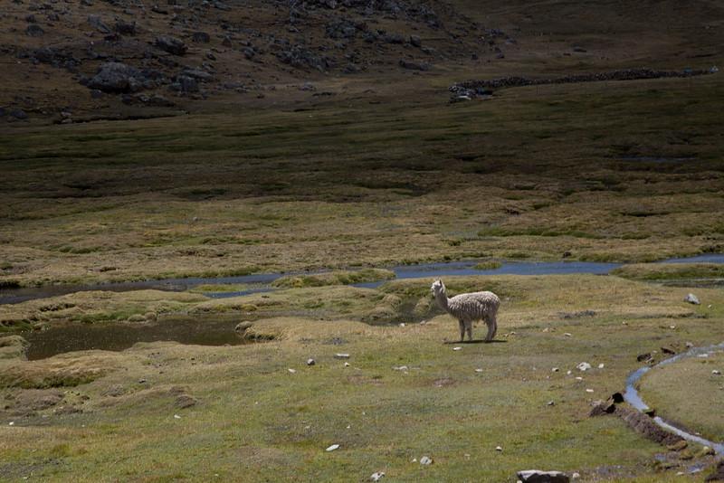 Peru_044.jpg