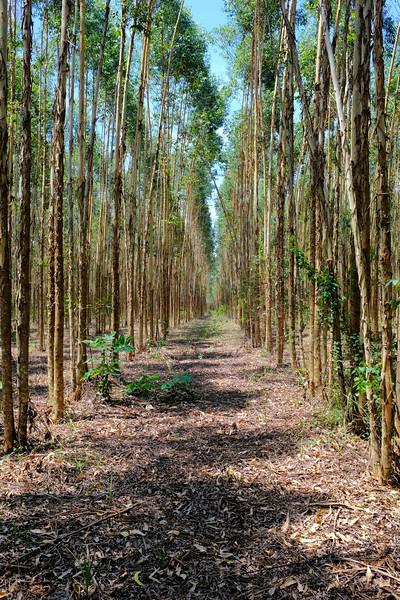 Plantation-DSCF0485.jpg