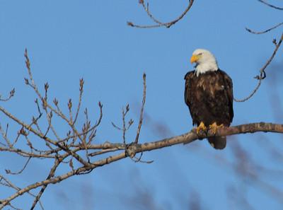Eagles 2013