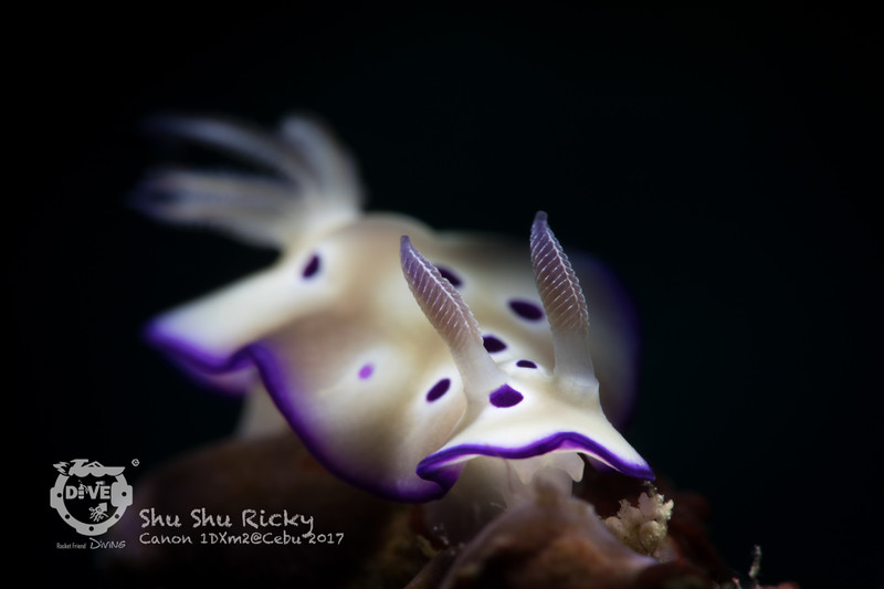 2017_NUDIBRANCH_Open_SHU SHU RICKY_CEBU_3.jpg