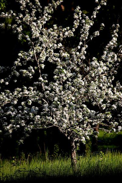 Dag_044_2012-maj-25_6712.jpg