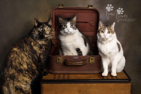 Thomas Cats
