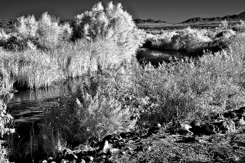 infrared-14-5-Edit-Edit-Edit-Edit-Edit.jpg