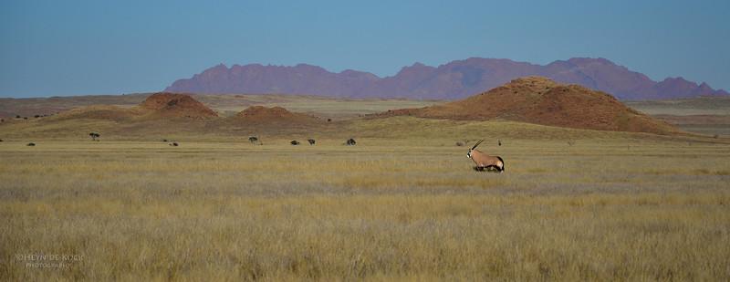 Gemsbok, Southern Namibia, July 2011-2.jpg