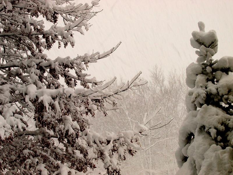 snow storm 3.jpg