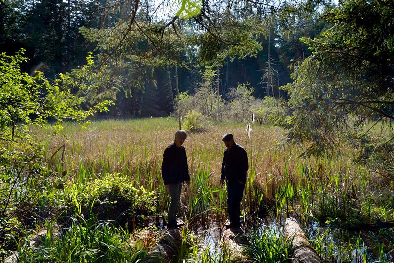 wetlands_21.JPG