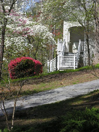 Spring_Blooms_In_Raleigh_NC