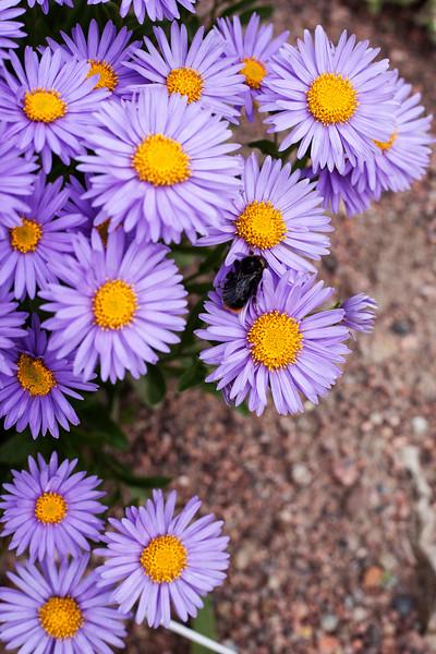 2016-06-10_Botanical_Garden_007.jpg