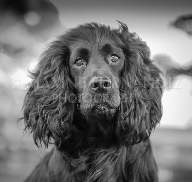 Dogs-4459-Edit.jpg