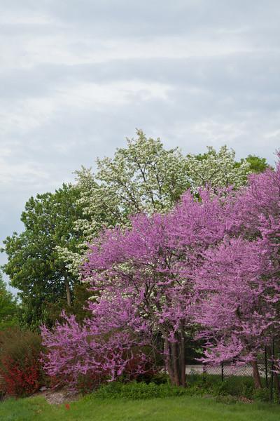Spring13-0383.jpg