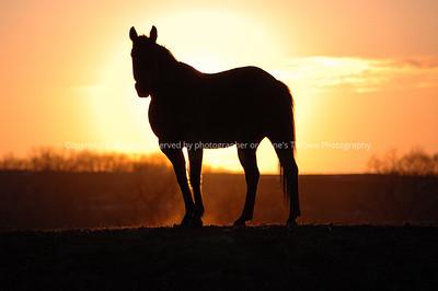 horse_sunset-madison_co-21feb07-4398