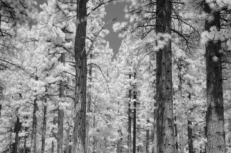 tahoe-2000.jpg