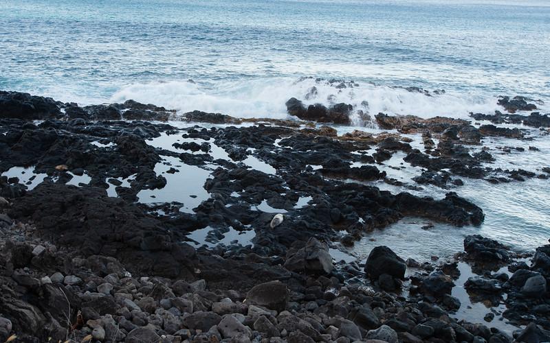 Hawaii2019-779.jpg