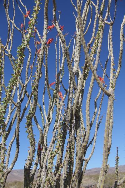20190524-40-SoCalRCTour-Ocotillo Patch-Joshua Tree NP.JPG