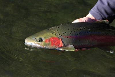 Trinity River Nov 2011