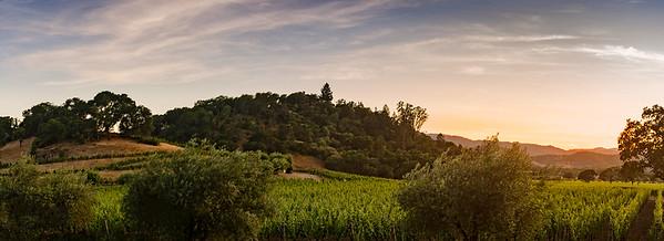 Sunset On The Vinyard