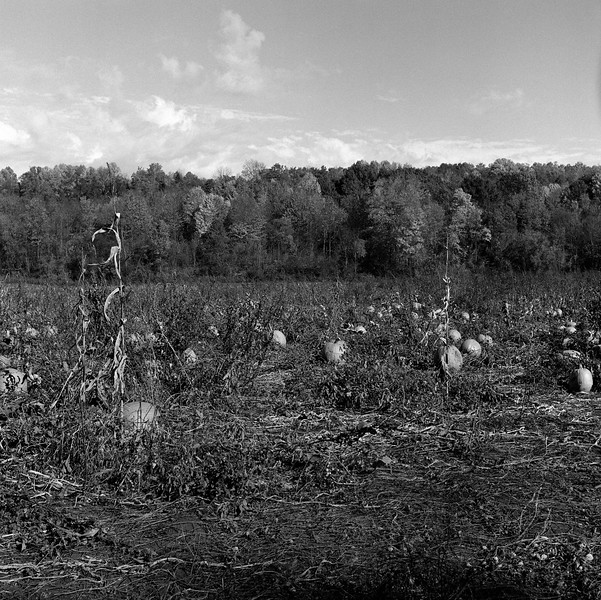 Pumpkin Patch, Oneida, NY. October 2014