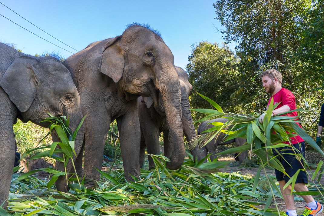 Feeding Journey to Freedom Elephants