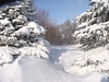 deep snow in the yard and between the trees