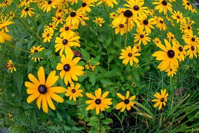 2020-08-01 Flowers