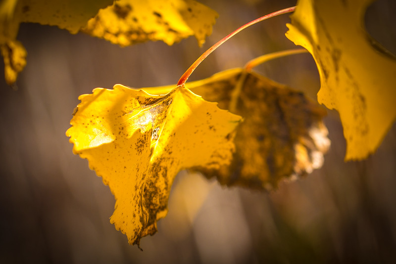 20151024-Fall Colors-55.jpg