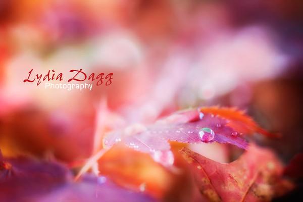 Maple Leaf Dewdrops, #8230