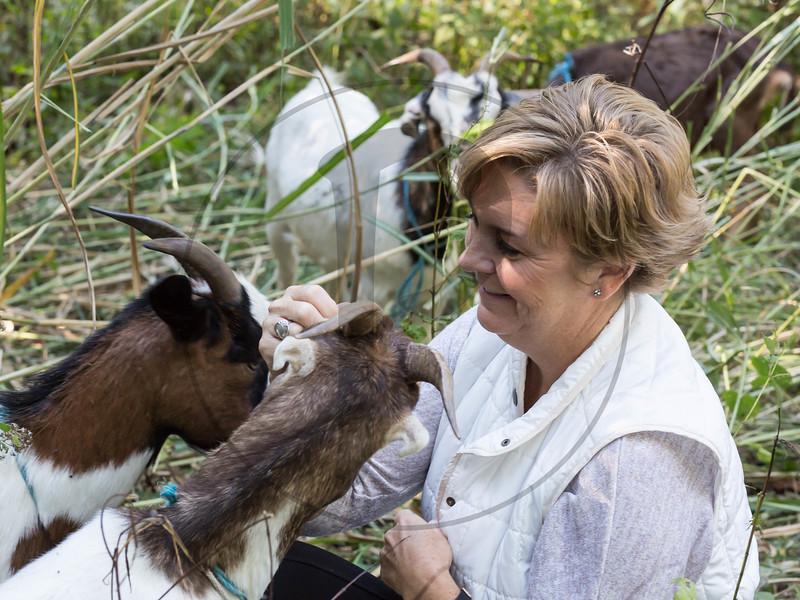 Goats-127.jpg