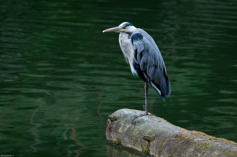 Warten auf den Fisch / Waiting for the fish