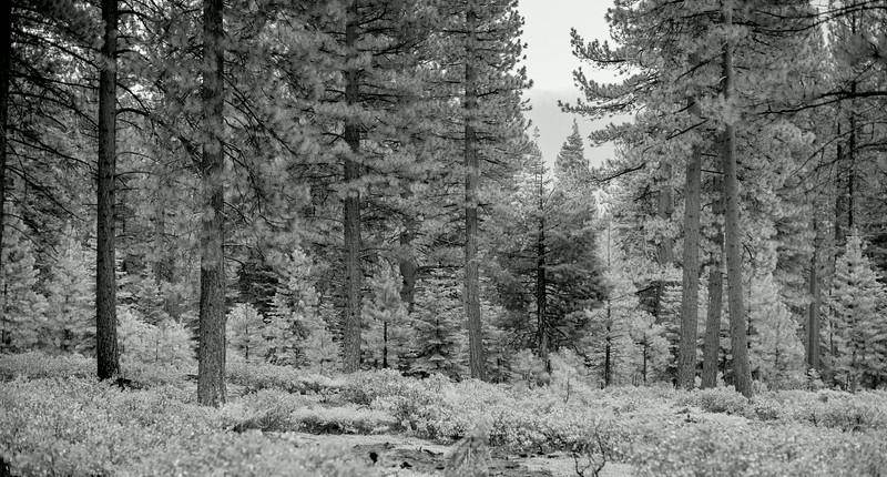tahoe_1086.jpg
