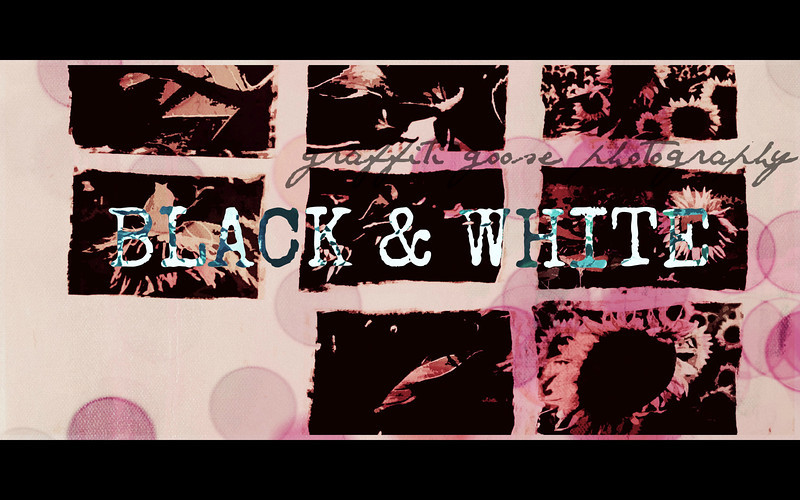 Blackandwhite .jpg