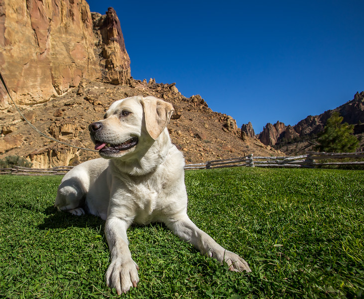 Dogs Of Smith Rock-42.jpg