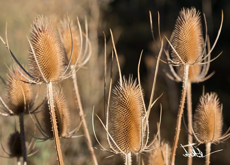 Flowers-1-6.jpg
