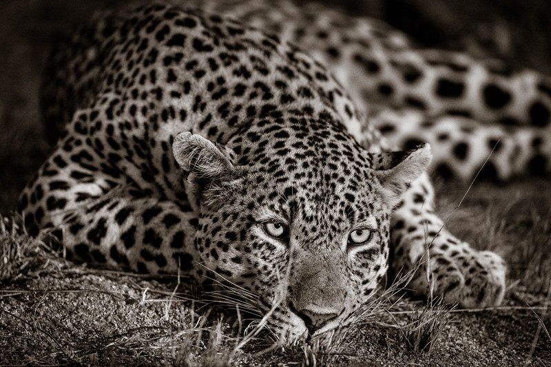 LeopardHills-20191028-1135.jpg