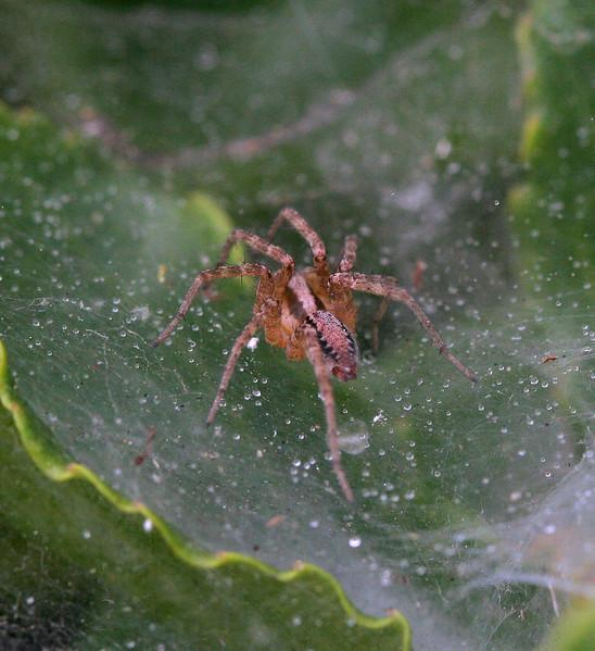 5912 Spider.jpg