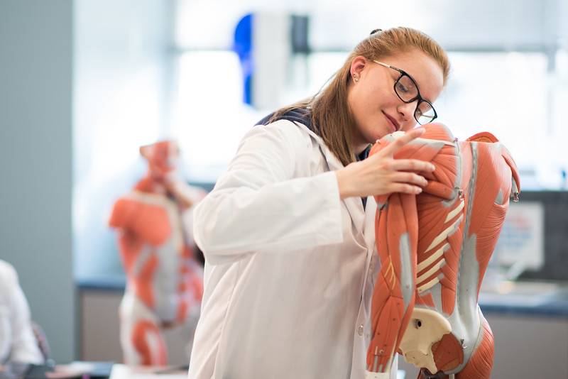 Daniela Flores studies the muscular system of the upper body.