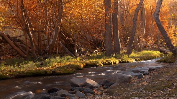 Sierra Fall Color - Bishop Creek / McGee Creek 2019