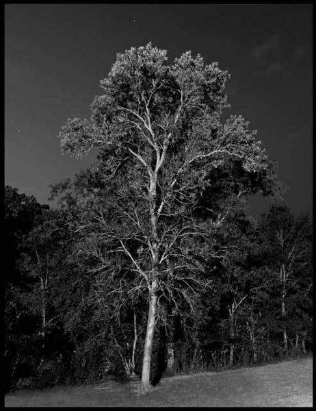 8. Night Tree, by cosmonaut. 9/11/07, E-510.