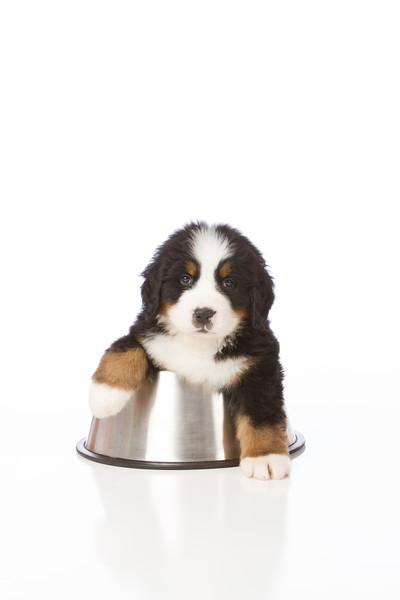 2013-Pearson Pups-Jun02-0367.jpg