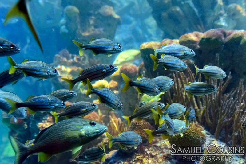 Fish in the main tank at the New England Aquarium.