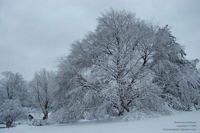 Winter in Massachusetts