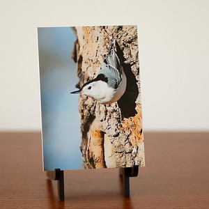 Nuthatch Decor